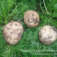 大量批发甘肃定西一点红土豆新鲜土豆