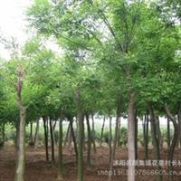 供应:批发各种规格国槐移栽国槐国槐树附国槐栽培技术