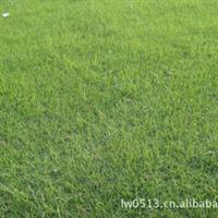 冬季热卖四季草皮混播草坪【坪色深绿冬天不枯黄量大价优】
