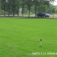 【自产自销】优质百慕大黑麦草混播草坪弹性好密度高