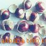 供应七叶树种子、桫椤树、梭椤子、天师