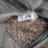 现采摘白榆种子板蓝根种子白蜡种子红豆杉种子热销中