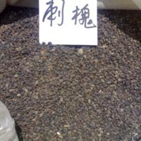 供应刺槐、小苗、大规格