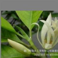 白玉兰桂花七里香绿化苗木价格
