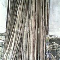 榕树小叶榕绿化苗木多根扩径胸径1-2米乔木榕树