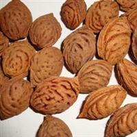 常年批发新的毛桃核毛桃胡桃树种子桃胡子白榆种子