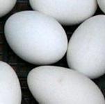 生态鹅蛋商品鹅蛋价格新鲜鹅蛋有清脑益智功能,对增强记忆有特效