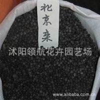 批发供应优质北京栾树种子林木种子当年新采