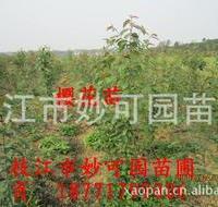 开粉红色花的自家樱花苗量大批发18771799006湖北宜昌