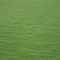 大观园花木场专业生产黑麦草草坪苗木转接绿化工程