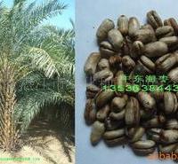 供应鸡冠刺桐种子,鸡冠花种子,苗木种子,观花树种子,绿化种子