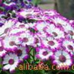 提供花卉室内植物租赁观叶植物物业管理配套服务