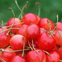 供应陕西大樱桃
