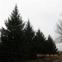 2012打折出售圣诞树—大型圣诞树—天然圣诞树186-4084-8686