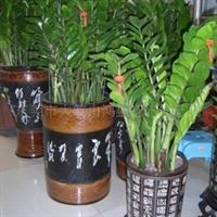 东莞大岭山鸿盛花木园艺场销售室内观叶植物送货上门