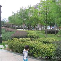 福建梦一丹园林各种绿化苗木混搭园林绿化项目展示