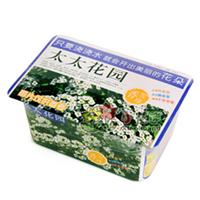 太太花园—香雪球花卉迷你盆栽桌面QQ农场种子批发室内花草