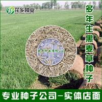 供应进口草坪种子多年生黑麦草种子四季长青矮生耐践踏冬季常青