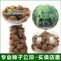 出售毛桃种子新采桃树种子优质桃胡种子一级质量批发零售