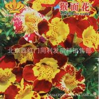 花卉种子波斯菊种子25粒装