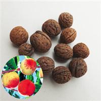 桃树种子毛桃树种子毛桃种子花卉林木种子嫁接桃树