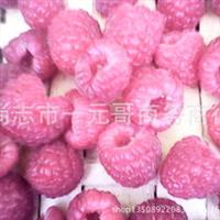 农家自产双季红树莓鲜果马林托卜托朴新鲜水果新摘的