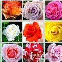 花卉种子藤本月季种子月月红月季可盆栽庭院种植23个品种