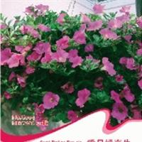 花卉种子垂吊矮牵牛种子喇叭花碧冬茄灵芝牡丹花期超长50粒