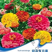 花卉种子切花/粉百日草百日红步步高百日菊五色梅50粒/包