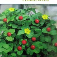 水果种子蛇莓种子小红果种子龙吐珠三爪龙野三七50粒/包