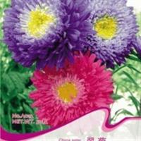 各色翠菊种子江西腊七月菊姜心菊较好种的盆栽花50粒