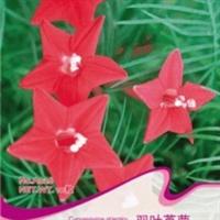 花卉种子羽叶茑萝种子新娘花红无星五星花蔓生爬藤10粒/袋