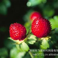 水果种子蛇莓种子蛇泡草三匹风龙吐珠三爪龙野三七大莓