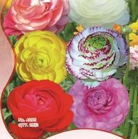我要发芽花卉种子花毛茛种子波斯毛茛洋牡丹芹菜花25粒/包