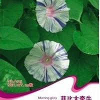 花卉种子提供高矮各色精品大牵牛花喇叭花混色20粒/包