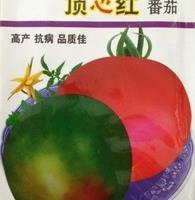蔬菜种子顶心红番茄种子一点红西红柿中熟高产抗病品质佳2g/包