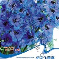 花卉种子切花飞燕草南欧翠雀千鸟花多年生宿根50粒/包