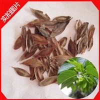 精选优质杜仲种子特价杜仲树种子批发杜仲种子中药杜仲