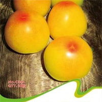 蔬菜种子黄一点红种子20粒/包