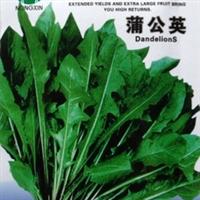 蔬菜种子蒲公英种子可食用野生植物鲜嫩可口耐寒高产3g/袋