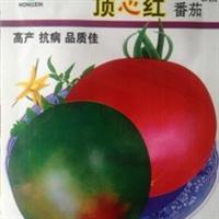 蔬果种子顶心红番茄种子一点红洋柿子酸甜汁多抗病高产5g/包