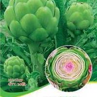 蔬菜种子朝鲜蓟种子菊蓟菜蓟法国百合荷花百合蔬果20粒/包