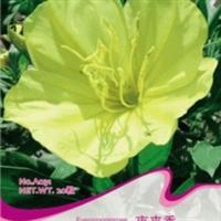夜来香种子20粒花种子鲜花籽春播秋播盆栽易种花草花坛