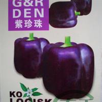 【紫珍珠彩椒种子】甜椒种子彩色辣椒特菜种子50粒原装