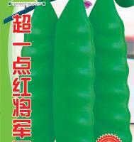 寿光蔬菜种子批发网超一点红将军王芸豆种子耐低温弱光200克