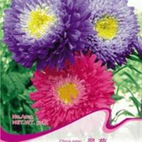 【翠菊种子】混色重瓣家庭阳台盆栽较好养的花卉春播花籽30粒