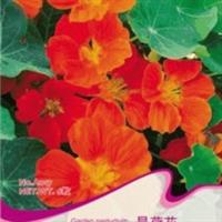 花卉种子旱荷花旱金莲金莲花种子阳台种植约5粒