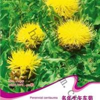 花卉种子批发花卉彩包种子观花植物多年生矢车菊约40粒
