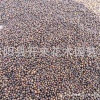 低价批发毛桃树种子苗果树种子