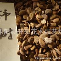低价批发柿子树种子1-2年树苗工程苗柿子树苗
